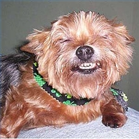 brush_dog_s_teeth_easy_steps_200X200.jpg